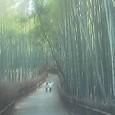 嵯峨野 竹林