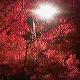 神泉苑 秋のモミジ